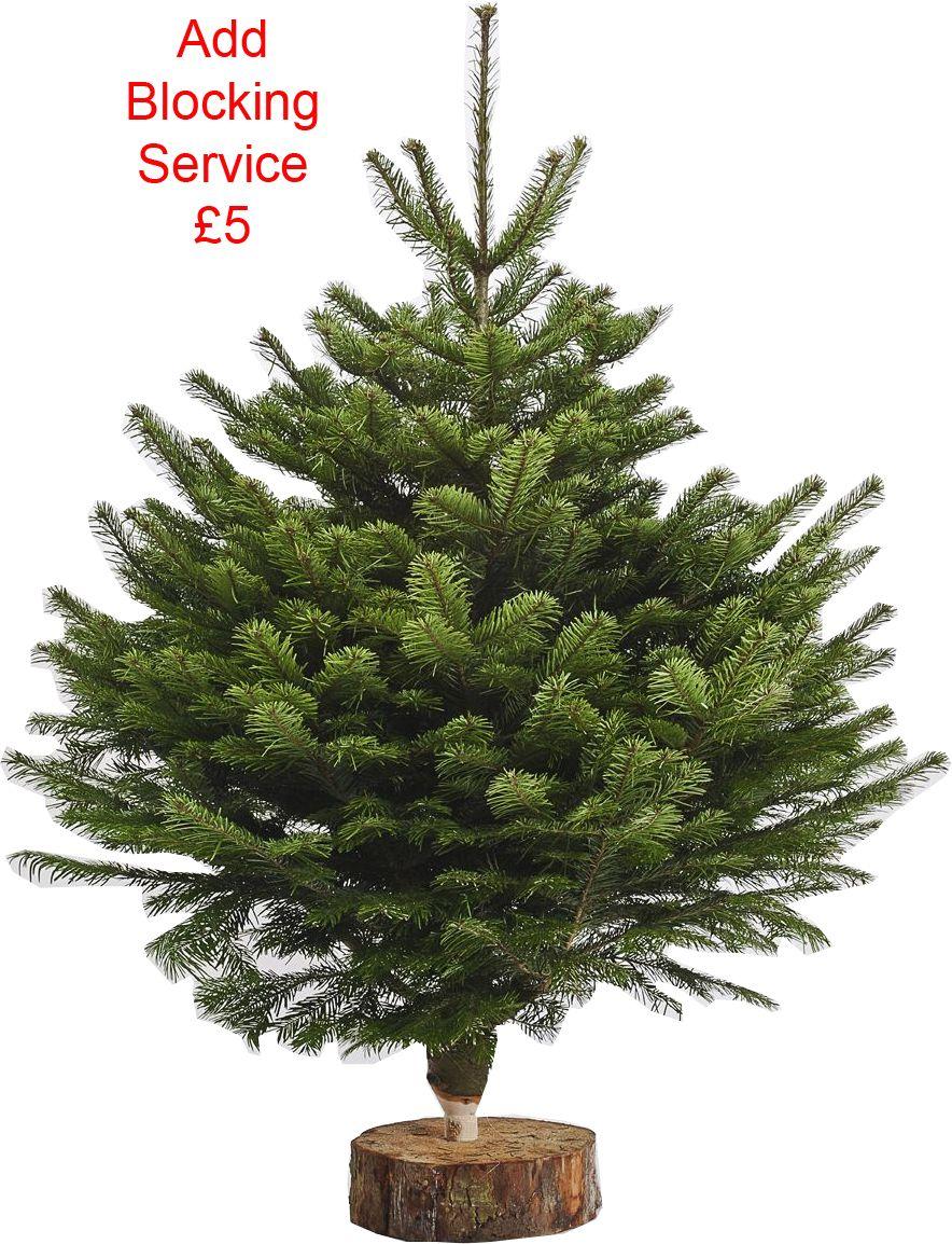 Non Drop Christmas Trees